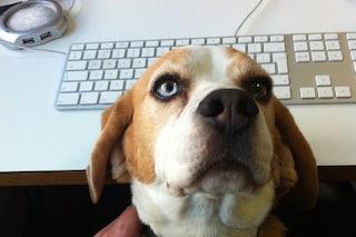 Giornata mondiale dei cani in ufficio: i benefici di Fido al lavoro