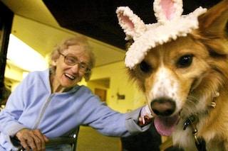 Cani e gatti ci fanno risparmiare 4 miliardi di euro in sanità