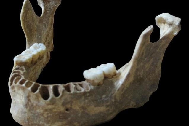 La mandibola dell'uomo di Oase (Max Planck Institute for Evolutionary Anthropology)