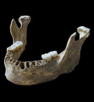 Un moderno europeo con un trisavolo Neanderthal