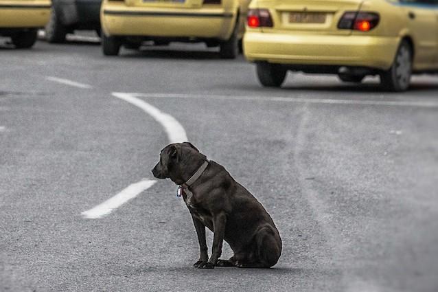 Giornata ENPA contro l'abbandono di cani, gatti e animali domestici