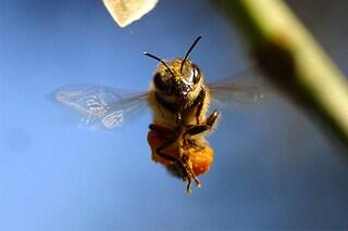 5 cose da sapere in caso di puntura di api o di altri imenotteri