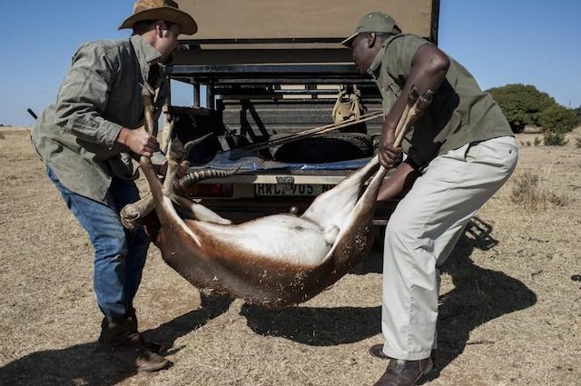 Animali selvatici cacciati da ricchi paganti