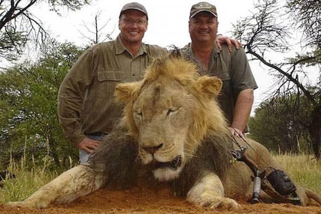 Safari di caccia grossa per uccidere i leoni