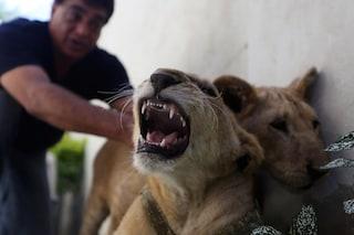 Gli animali provano emozioni? Come la risposta della scienza ha cambiato il mondo