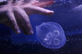 Punture di meduse: sintomi e rimedi contro il bruciore