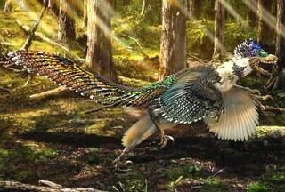 Il Velociraptor aveva un cugino piumato