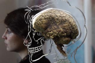 Creato in laboratorio il primo cervello umano non pensante