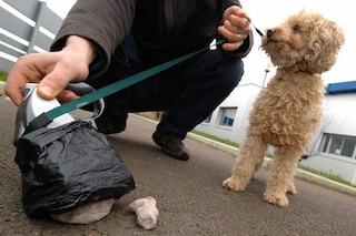 Test del DNA delle feci del cane per multare chi non raccoglie