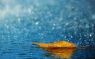 """Pioggia estiva e profumi """"ipnotici"""", ecco da cosa vengono prodotti"""