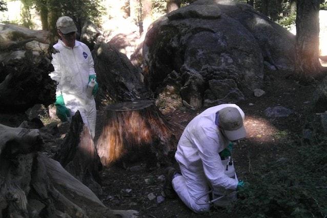 Yosemite National Park e la peste