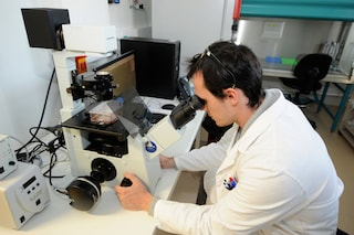 Scoperto come riprogrammare le cellule per sconfiggere il cancro