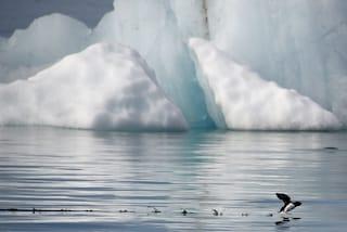 Quali sono i costi dello scioglimento dei ghiacci?