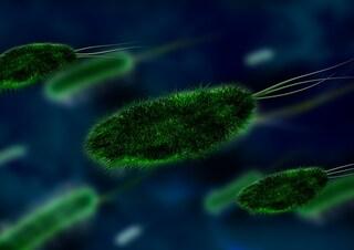 Ciascuno è circondato dalla propria nuvola di batteri