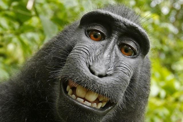 Naruto, il macaco che si scatta i selfie