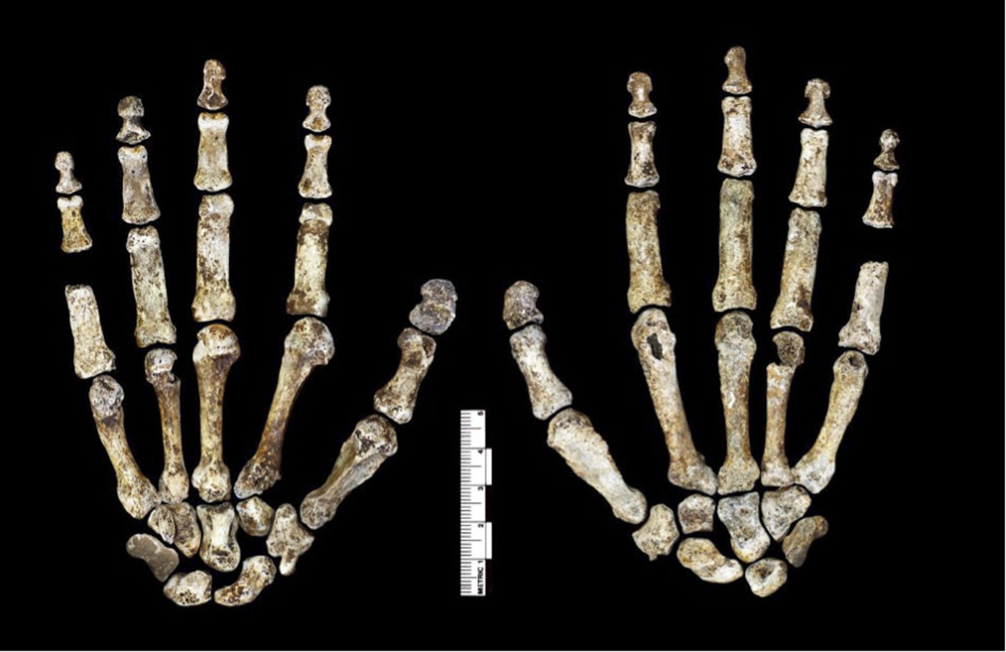 Mani di homo naledi (via Elife)
