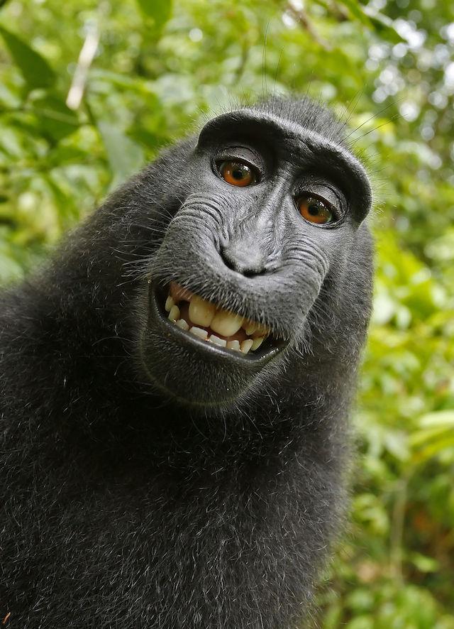 Il selfie di Naruto