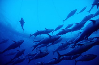La fauna marina si è dimezzata in 40 anni a causa dell'uomo