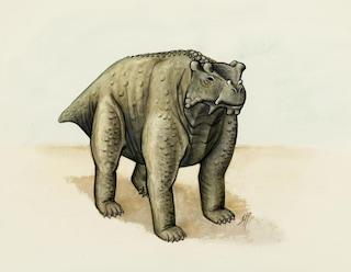 Questo è stato il primo animale a camminare a quattro zampe (forse)