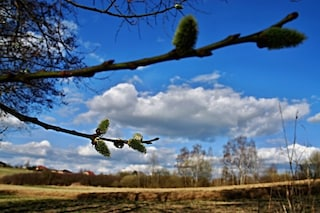 La primavera è arrivata: perché l'equinozio è il 20 marzo e non il 21