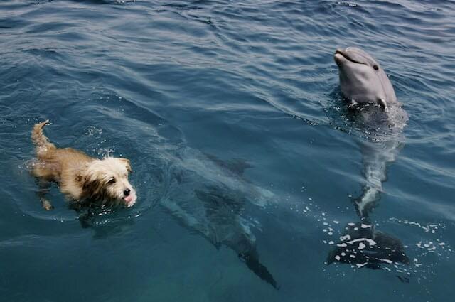 Cani e delfini