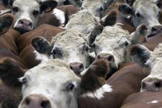 La Carne rossa e lavorata è pericolosa? Sì, ma 10 volte meno del fumo
