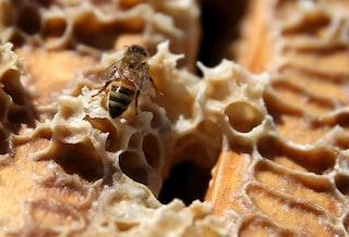 L'uomo era apicoltore già 9.000 anni fa
