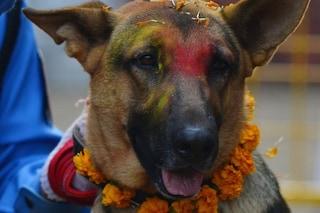 Ogni anno in Nepal si festeggiano e ringraziano i cani per la loro amicizia