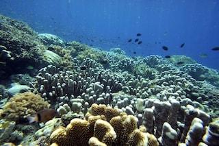 Creare super coralli per contrastare il riscaldamento globale