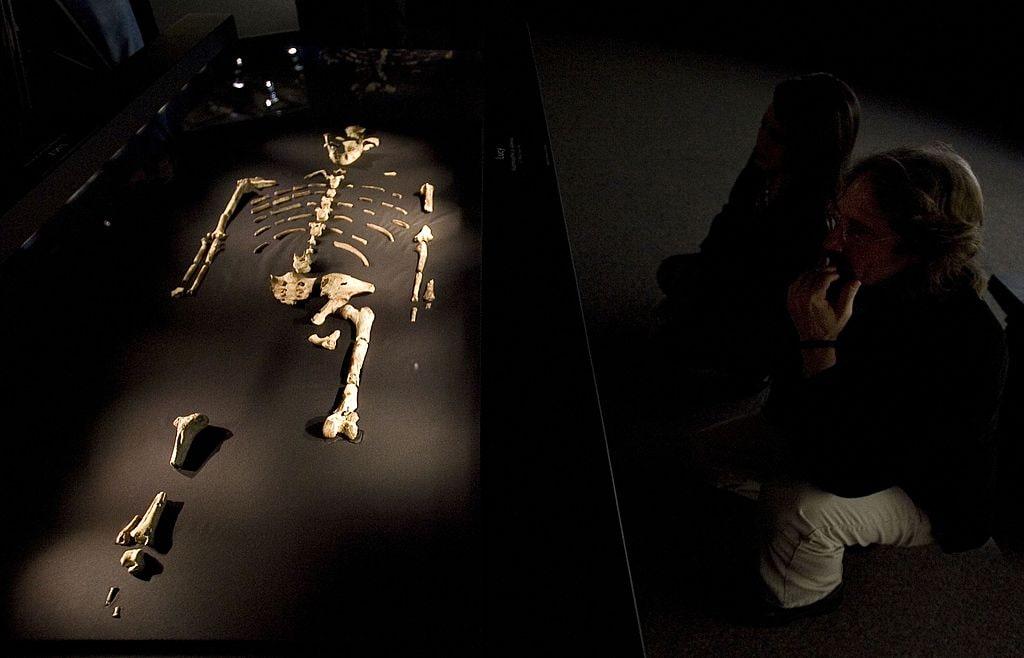 Lo scheletro di Lucy durante un'esibizione negli Stati Uniti