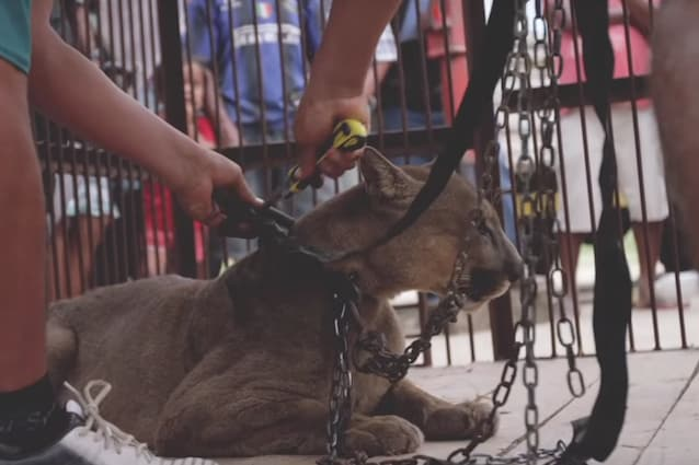 Animal Defenders International – Mufasa