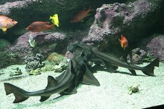 Gli squali non sono più predatori perfetti a causa dell'inquinamento