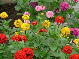 I primi fiori che germoglieranno nello spazio