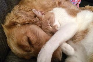 Abbiamo bisogno di un vaccino Covid anche per cani e gatti?