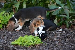 I primi 7 cuccioli di cane nati dalla fecondazione in vitro