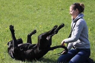 Il tuo cane capisce davvero che cosa stai provando