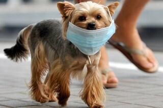 Il fumo passivo è pericoloso per i nostri cani e gatti