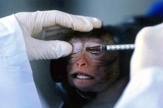 Geneticamente modificate, ecco le prime scimmie affette da autismo