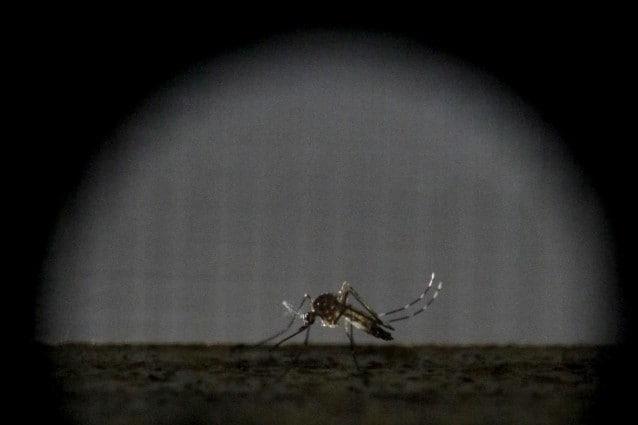 Un anticorpo che neutralizza lo Zika virus