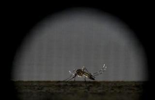 Il vaccino contro lo Zika virus verso la sperimentazione sugli umani