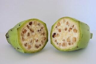 Ecco come sono cambiate le verdure e la frutta che mangiamo
