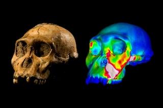 I nostri antenati non gradivano i cibi duri