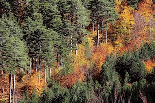 Anche le foreste europee sono responsabili dell'inquinamento
