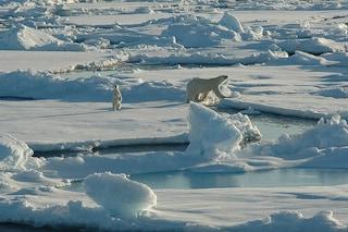 Il ghiaccio marino artico scomparirà completamente a settembre: un incubo per orsi polari e foche