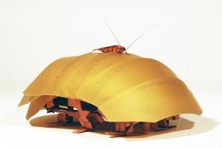 Il robot che si crede uno scarafaggio