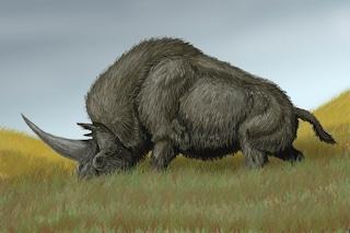 Quando gli unicorni esistevano davvero