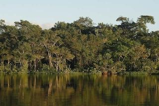 Prova ad immaginare un mondo senza foreste. Ora sai perché dobbiamo proteggerle