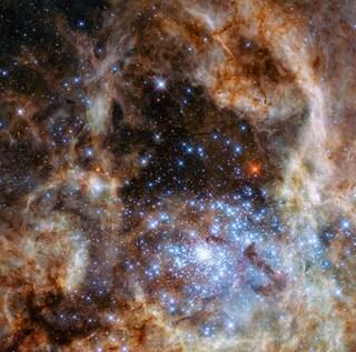 Nove giganti cento volte più grandi del Sole