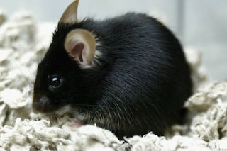 Lesioni del midollo spinale dei ratti riparate con le cellule staminali