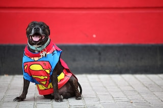 Cane salva la sua proprietaria dal cancro grazie all'olfatto: è possibile?